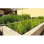 Picture of Projar consigue la depuraci�n de aguas residuales con un sistema ecol�gico que imita a los humedales