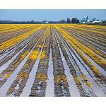 Foto de Disminuye un 3,1% el volumen de agua de riego en el sector agrario en 2012