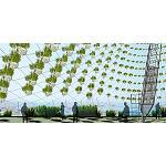 Foto de Jardines verticales de bajo consumo de agua