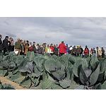 Foto de Intia y Cajamar organizan una nueva Jornada de Cultivos hort�colas de invierno