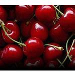 Foto de Chile planea exportar 100.000 toneladas de cerezas