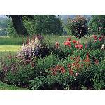 Foto de El MAGRAMA celebra la reducci�n del tipo impositivo del IVA para flores y plantas ornamentales