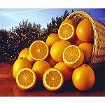 Fotografia de Perspectivas favorables para la naranja Ribera DOP