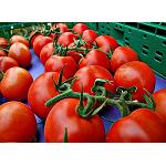 Fotografia de Almer�a sigue siendo el primer exportador de frutas y verduras frescas de Espa�a