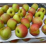 Fotografia de Las manzanas polacas tienen problemas para los viajes largos