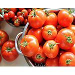 Fotografia de El Grupo franco-hispano-italiano de tomate analiza el fuerte crecimiento de la importaci�n de Marruecos