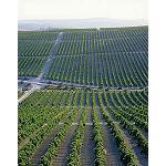 Foto de La Junta de Andaluc�a traslada al sector del vino las novedades normativas que afectan a la autorizaci�n de plantaciones de vi�edo