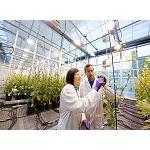 Foto de Bayer CropScience apuesta por nuevos m�todos para incrementar el rendimiento agr�cola
