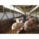 Foto de Sector porcino: una explotaci�n de tama�o medio en Espa�a pierde m�s de 1.500 euros a la semana