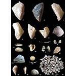 Foto de Los neandertales ib�ricos com�an marisco hace 150.000 a�os