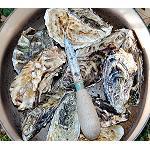 Foto de La EFSA eval�a medidas de control para el norovirus en ostras
