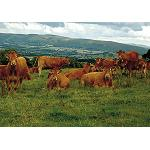 Picture of The sector of ovino and beef of England (Eblex) saw  of long in Alimentary