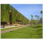 Picture of Vegetal walls: buildings like trees and cities like forestrys