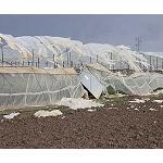 Foto de La ciclog�nesis explosiva se ceba con el cultivo de la flor cortada en el Bajo Guadalquivir
