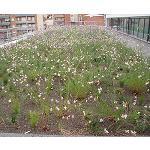 Fotografia de Tend�ncies en jardineria: substrats per a cobertes enjardinades