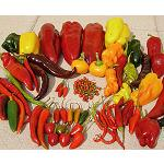 Picture of The aroma of the peppers inherits  of a generation to the following