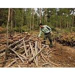 Picture of The mountains in fact add  to the application of Certification of Sustainable Forestry Gesti�n
