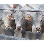 Picture of Near of 10.000 producers of Galician milk will receive the help to the only payment
