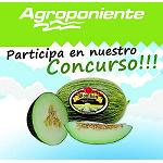 Picture of The culinary creativity has prize with the traditional �Contest of Recipes with Melon Bomb�n of Agroponiente'
