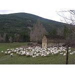 Picture of The Appointment preserves the autochthonous races of beef and ovino of the Aragonese Pyrenees