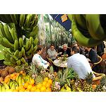 Picture of The producers of fruit and vegetables receive another bathroom of masses in Fruit Logistica