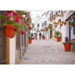 Picture of Estepona Wants to be the �Garden of the Costa del Sol'