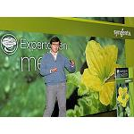 Picture of Syngenta Presents his new variety of melon �leather of toad'