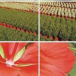 Picture of The Spanish export of flower and alive plant grows 33% and the import 19% in January