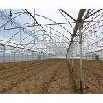 Picture of Ulma Agricultural installs the first invernadero type 'Multicapilla Gothic' of the Huerta of Madrid