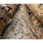 Picture of El sector forestal en Galicia