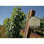 Foto de Terras Gauda investiga nuevas aplicaciones del bagazo para obtener el primer aceite de semilla de uva