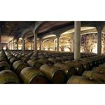 Foto de Lluvia de premios para el vino ecol�gico de Castillo de Mendoza