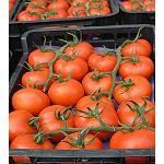 Foto de El tomate Paladium confirma su calidad excepcional con precios m�s altos para los ramos de calibre G