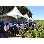 Fotografia de Syngenta presenta en una jornada de Vi�a sus soluciones m�s avanzadas para este cultivo