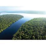 Foto de Un estudio independiente muestra que APP tiene suficientes plantaciones para cumplir su compromiso de Deforestaci�n Cero