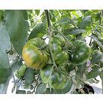 Picture of El enriquecimiento carb�nico y la salinidad en la producci�n de tomate asurcado de alto valor comercial