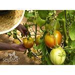 Foto de Biopesticidas y bioestimulantes, las bases para una agricultura actual y de futuro