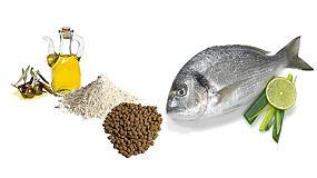 Foto de El aceite de oliva concentrado mejora el crecimiento y la salud digestiva en doradas