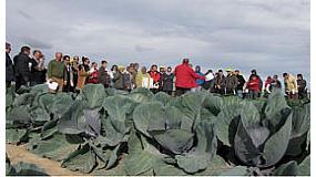 Foto de Intia y Cajamar organizan una nueva Jornada de Cultivos hortícolas de invierno