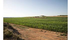 Foto de Riego por goteo subterráneo en cultivos de maíz en España