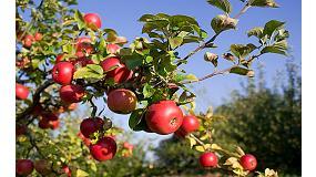 Foto de Evaluación de efectividad de Actium como precursor de la coloración en manzano (Malus domestica)
