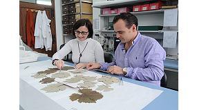 Foto de El CSIC y Jos� Est�vez colaboran para identificar las variedades de vid del herbario m�s antiguo del mundo