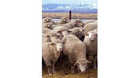 Picture of 2015, un a�o clave para la promoci�n de la carne de cordero y lechal espa�ola