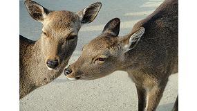Foto de Carne de caza, el valor de la tradici�n