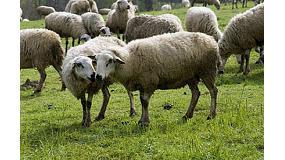 Foto de XIV Jornada sobre el ovino y el caprino en Lleida