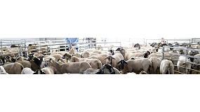 Picture of La 24� edici�n de Sommet de l�Elevage reunir� a 1.300 expositores y 2.000 animales de alto valor gen�tico