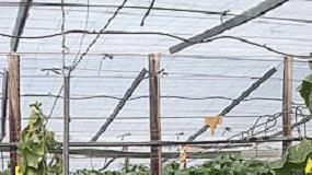 Fotografia de Cultivos enarenados y biodesinfecci�n en invernaderos de Almer�a. �Encuentro o desencuentro?