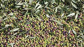 Foto de Jornada sobre el cultivo ecológico del olivo con riego localizado