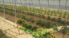 Fotografia de Jornada sobre control biol�gico y enemigos naturales en cultivos hort�colas