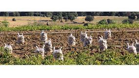 Picture of UPA advierte del peligro de �ruptura total� en el sector de la patata